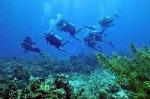 La Caleta, Santo Domingo diving